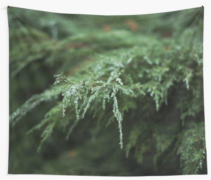 The fir  by lenaivanova