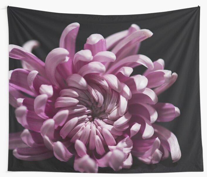 Chrysanthemum by lenaivanova