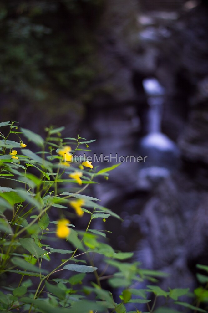 Flower in Front of Waterfall by LittleMsHorner