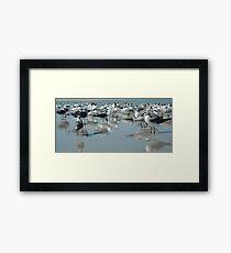 Bird's Eye View Gulls and Terns on the Beach Framed Print