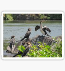 cormorant on lake Sticker