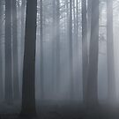Misty Morning Blues by George Wheelhouse