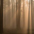 Foggy Woodland Sunrise by George Wheelhouse