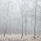 Misty Birches by George Wheelhouse