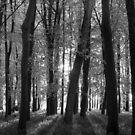 Woodland Sunset (B&W) by George Wheelhouse
