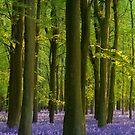 Bluebell Wood Panorama by George Wheelhouse