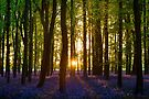 Bluebell Wood Sunset by George Wheelhouse