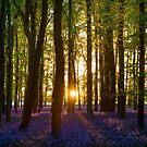 Bluebell Wood Sunset by George Wheelhouse