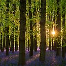 Low Sun in the Bluebell Wood by George Wheelhouse