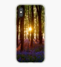 Bluebell Wood At Sunset (Centre Sun) iPhone Case
