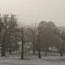 Wood in Fog by George Wheelhouse