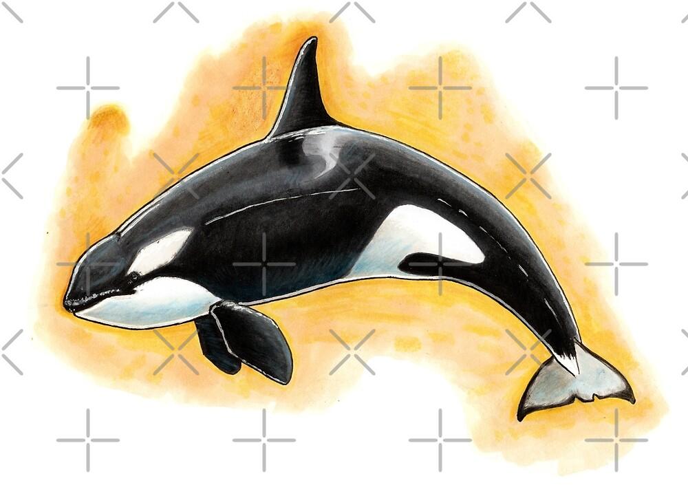 CorkyII - Draw Every Captive Orca Project nr. 1 by DutchOrca