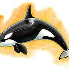 CorkyII - Draw Every Captive Orca Project nr. 1 by DutchOrca