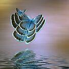 Bug by shalisa