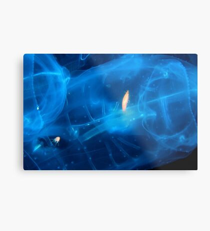 Trapped In Jelly Metal Print