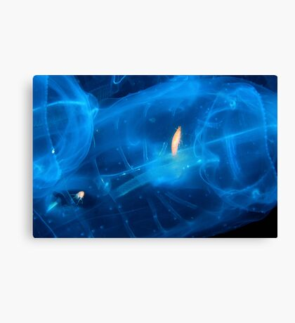 Trapped In Jelly Canvas Print
