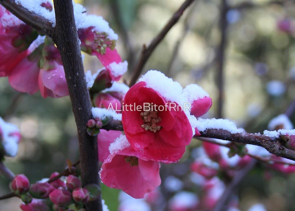 Winter Beauty  by ALittleBitofRnR