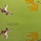 Frog by shalisa