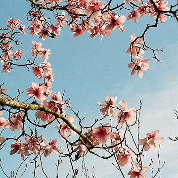 Spring by KaiWilliams