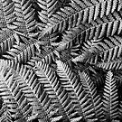 New Zealand Silver Fern by VanOostrum