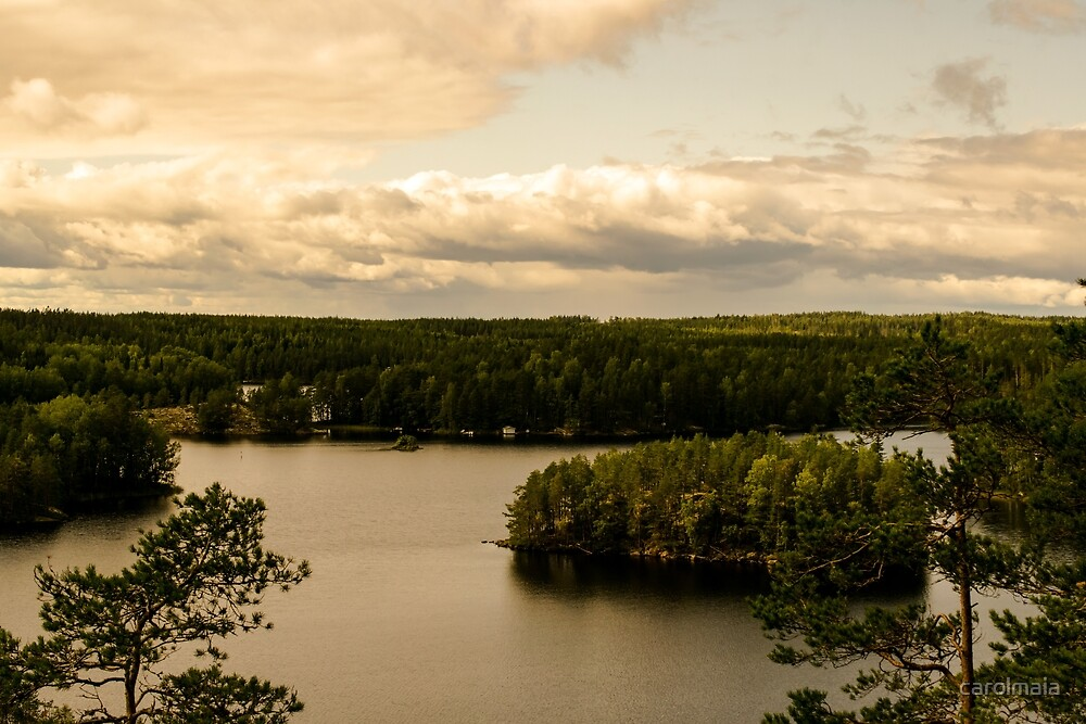 Forest and lake by carolmaia