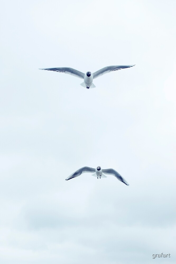 Seagulls in the sky by grafart