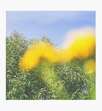 Summer Photographic Print
