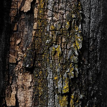Cool Brown wood bark with yellow lichen by PLdesign