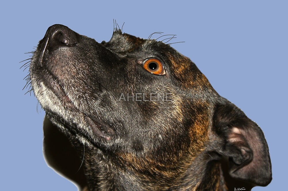 Serenity staffie by AHELENE