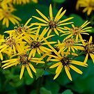 Yellow Beauty by Jim Caldwell