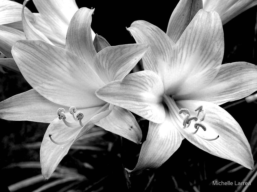 Lovely Lilies by Michelle Larrea
