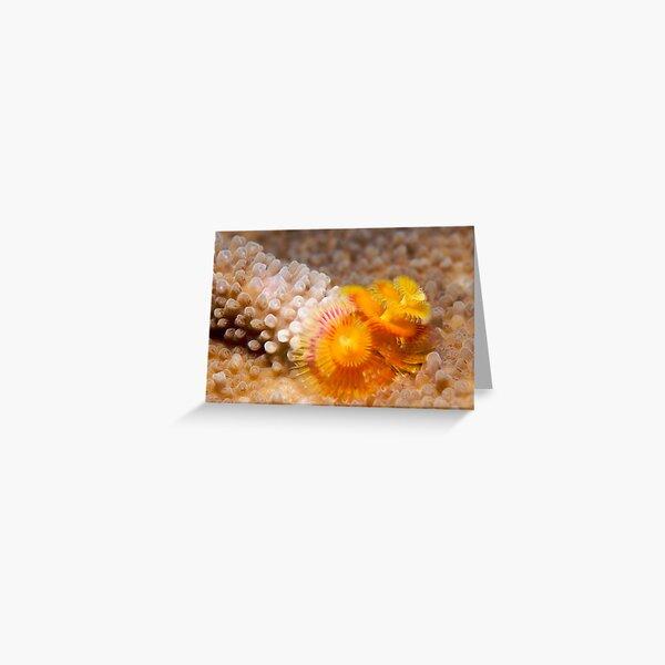 Ribbon Reefs - Christmas Tree Worms Greeting Card
