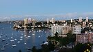 Rushcutters Bay by Trish Meyer