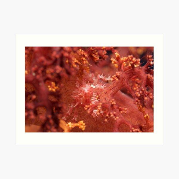 Ribbon Reefs - Coral Crab Art Print
