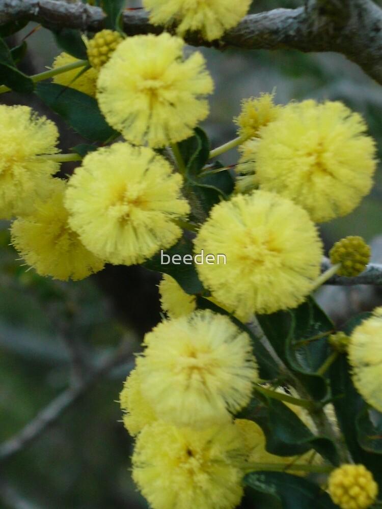 Acacia 2 by beeden