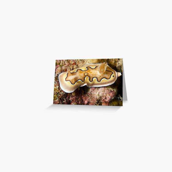 Ribbon Reefs - Nudibranch Greeting Card