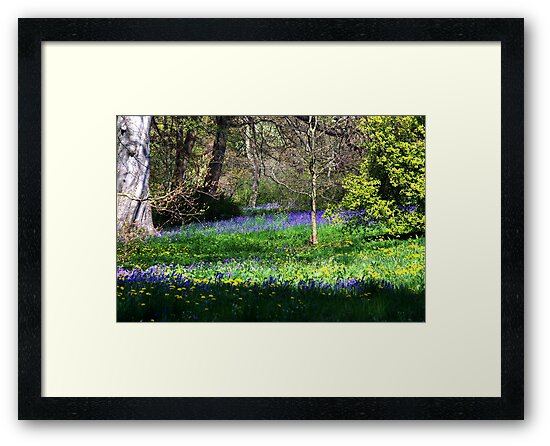 Bluebell Wood by Trevor Kersley