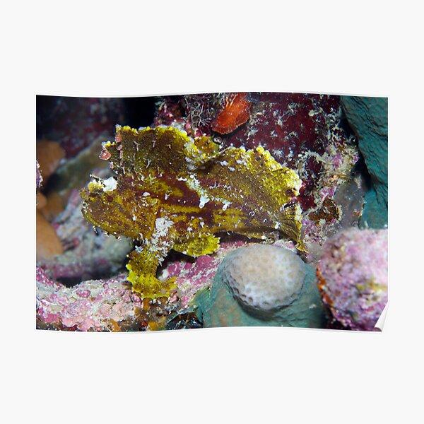 Ribbon Reefs - Green Leaf Scorpion Fish Poster