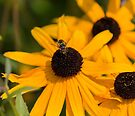 Hover Fly by John Velocci