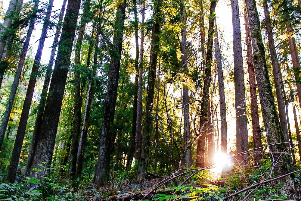 Light in the trees by Eric Muhr