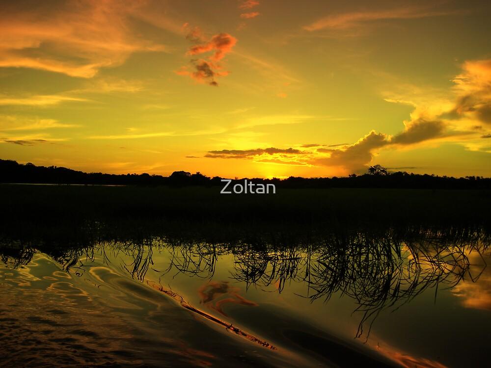 amazon landscape 3 by Zoltan