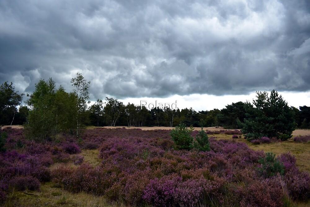 Heide by -Roland