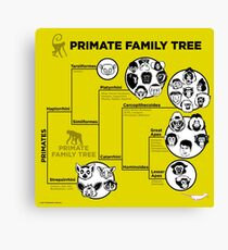 Primate Family Tree Canvas Print