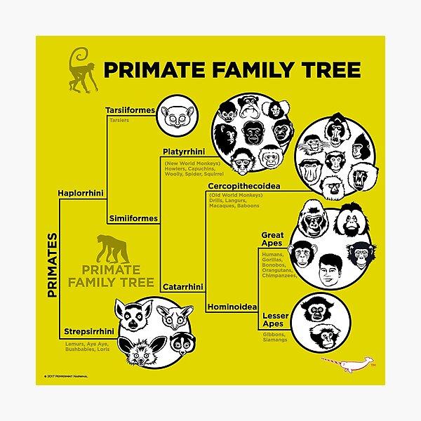 Primas Stammbaum Fotodruck