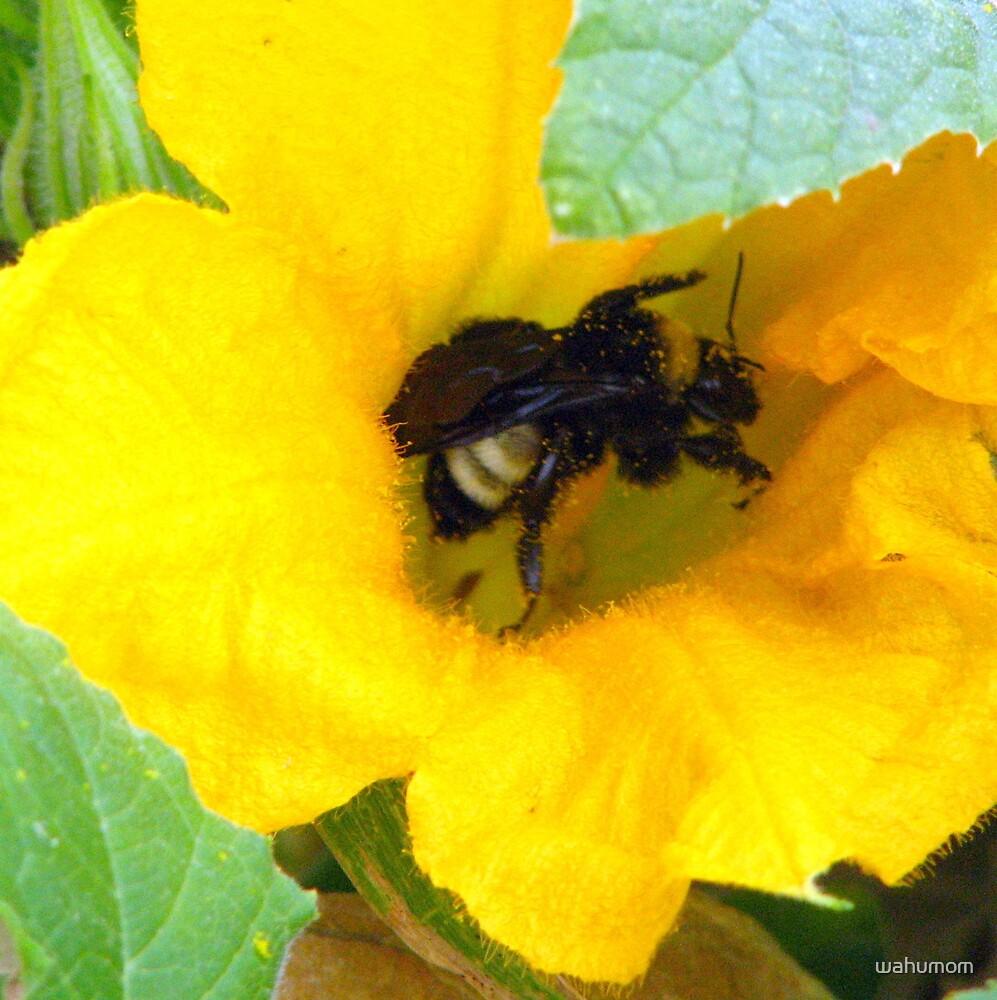 Pollen anyone.... by wahumom