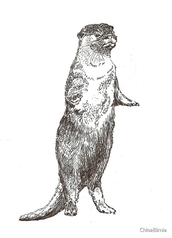 Otter by ChloeBirnie