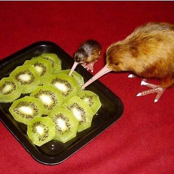 Kiwi by vanobras