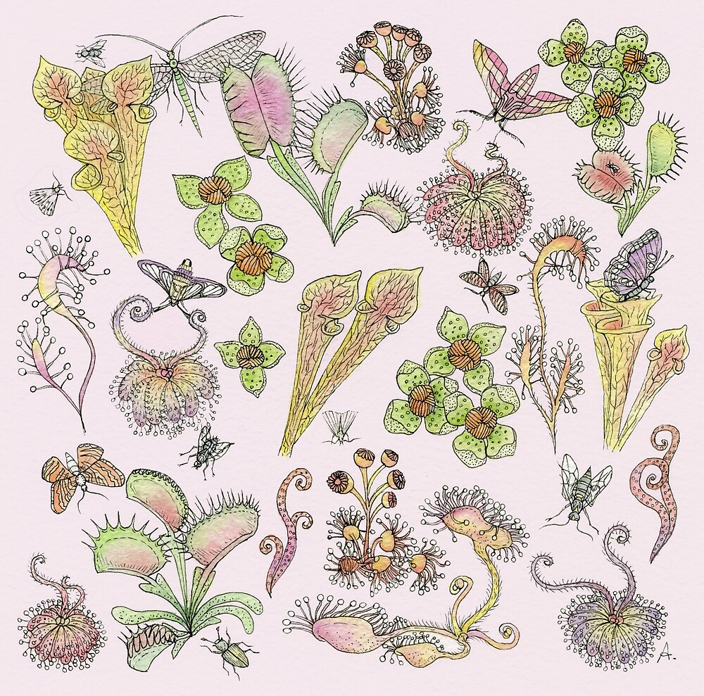 Carnivor plants by Audrey Robitaille