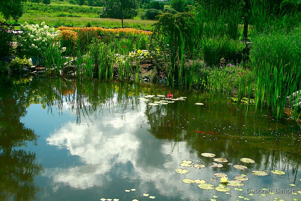 Natures Garden & Reflections by Deborah  Benoit