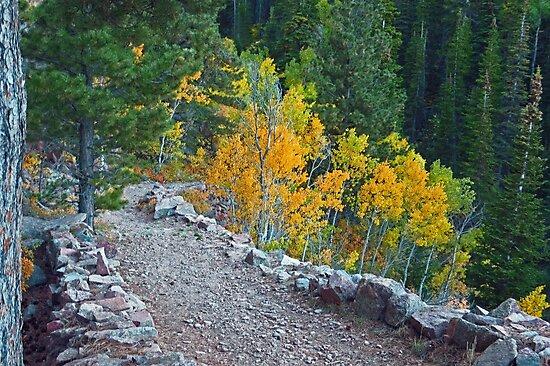 Fall on the trail by tuckalucky